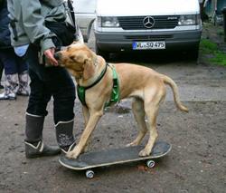 hundeführerschein niedersachsen prüfer